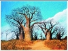 Baobab_Tree_I